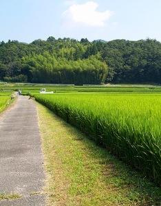 rice f (17)
