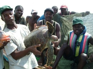 marine_turtle_in_mozambique