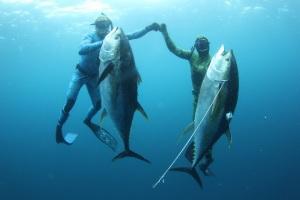 tuna-mz