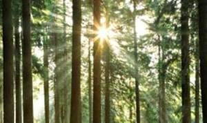forest-sun-ix