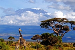 kilimanjaro-lrg