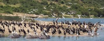 lake uganda