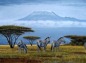 tazania ,zebra
